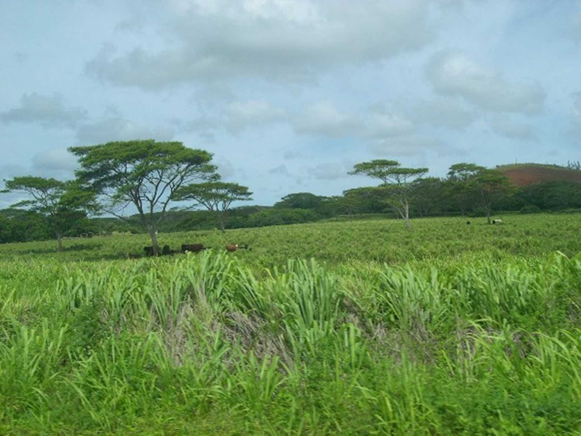 The Garden Isle has lots of open rural areas