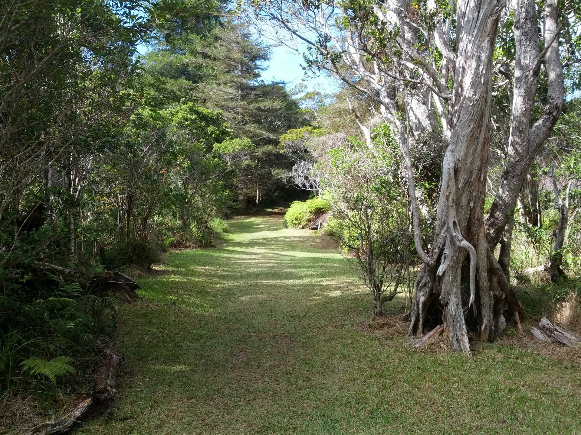 Hiking trails abound in Kokee State park near Waimea